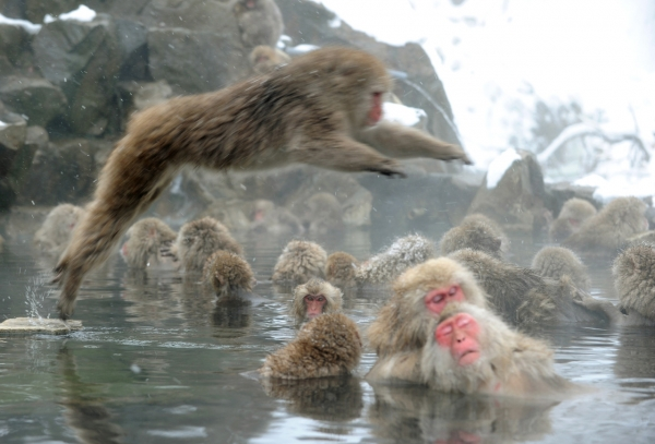 animals that enjoy bath time 16 pictures 15