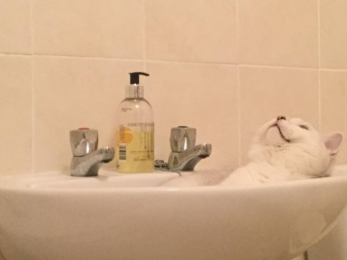 animals that enjoy bath time 16 pictures 17