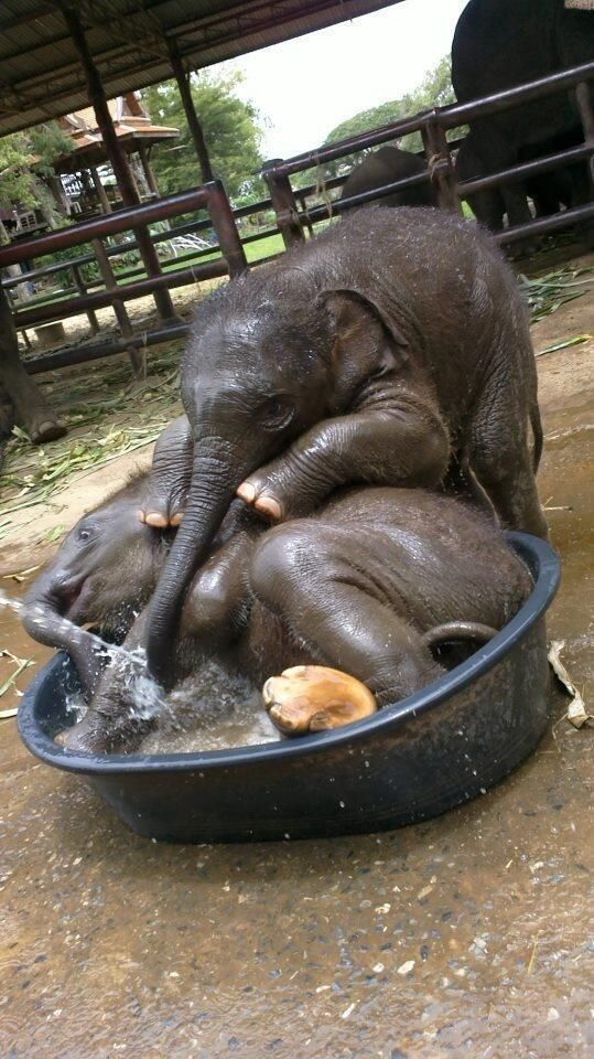 animals that enjoy bath time 16 pictures 3