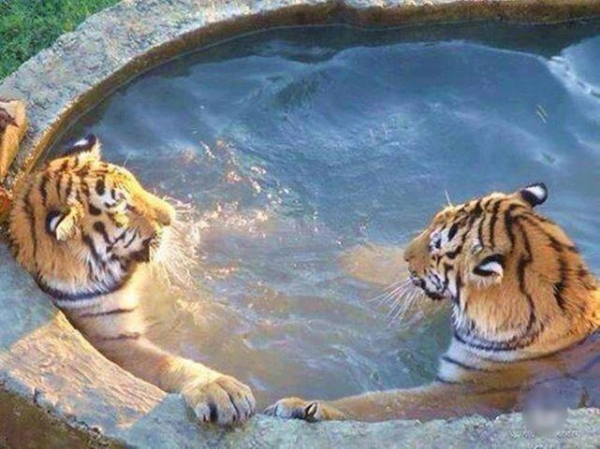 animals that enjoy bath time 16 pictures 5