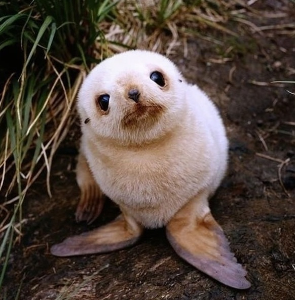 another adorable baby animal collection 13 pictures 1