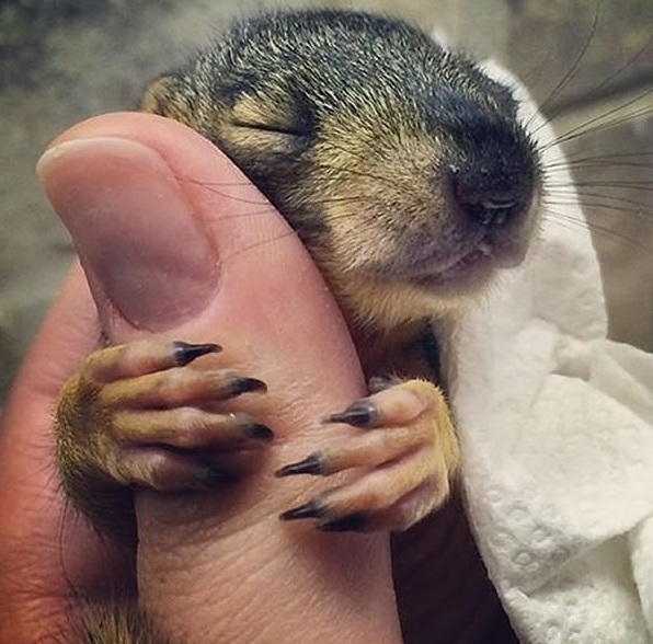 another adorable baby animal collection 13 pictures 10