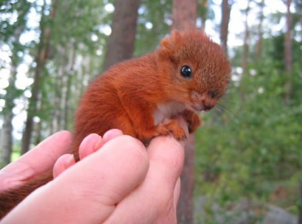 another adorable baby animal collection 13 pictures 5