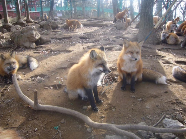 another beautiful place in japan zao fox village 17 pics 1 video 10