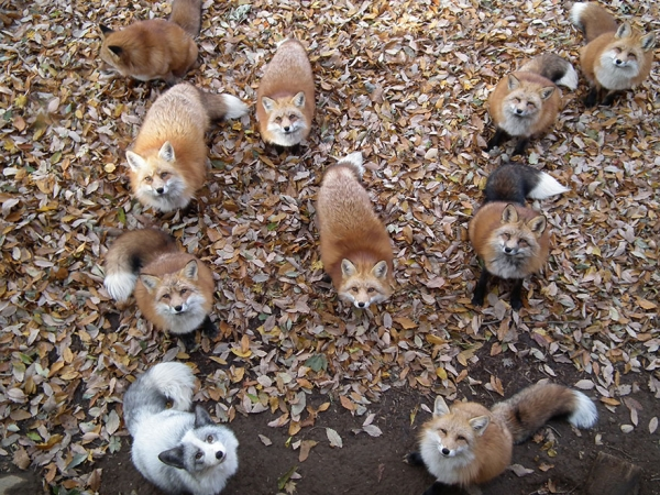 another beautiful place in japan zao fox village 17 pics 1 video 11