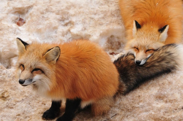another beautiful place in japan zao fox village 17 pics 1 video 12