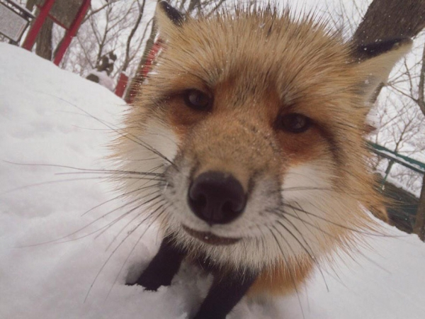 another beautiful place in japan zao fox village 17 pics 1 video 15