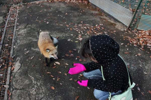 another beautiful place in japan zao fox village 17 pics 1 video 3