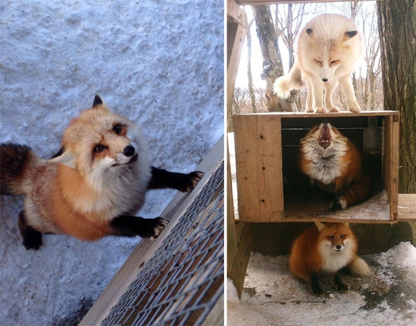another beautiful place in japan zao fox village 17 pics 1 video 9