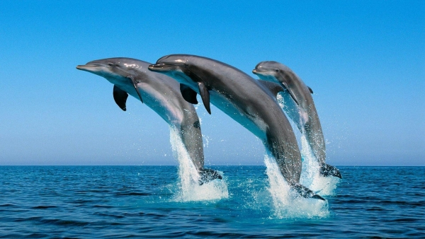 are dolphins really that smart these facts will tell you 12 pictures 1