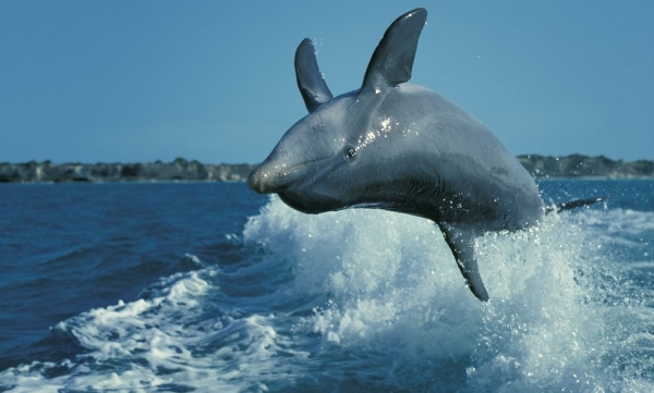 are dolphins really that smart these facts will tell you 12 pictures 4