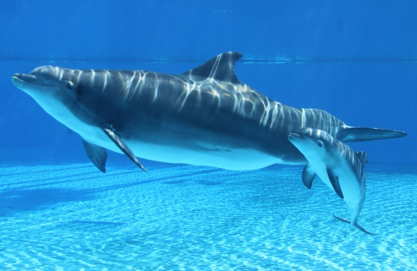are dolphins really that smart these facts will tell you 12 pictures 7