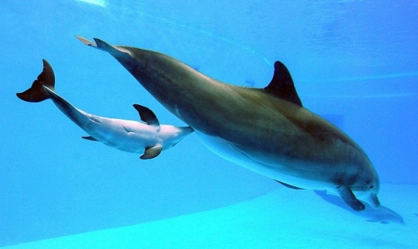 are dolphins really that smart these facts will tell you 12 pictures 8