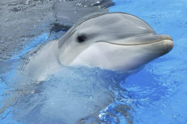 are dolphins really that smart these facts will tell you 12 pictures 9
