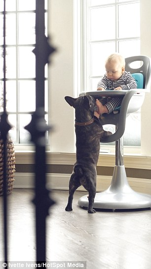 Baby And Bulldog Growing Up Together Pics Animals Look - Ivette ivens baby bulldog