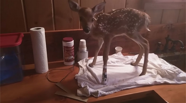 baby fawn 2