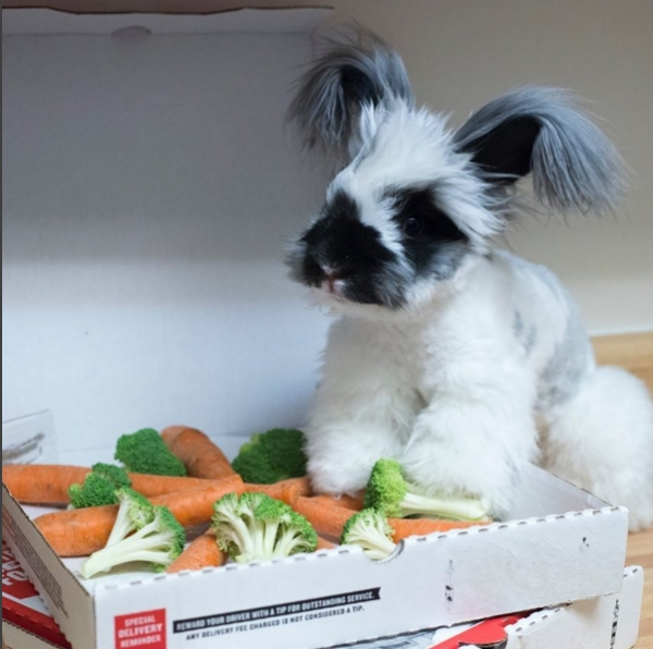 barnaby the adorable bunny 10 pictures 6
