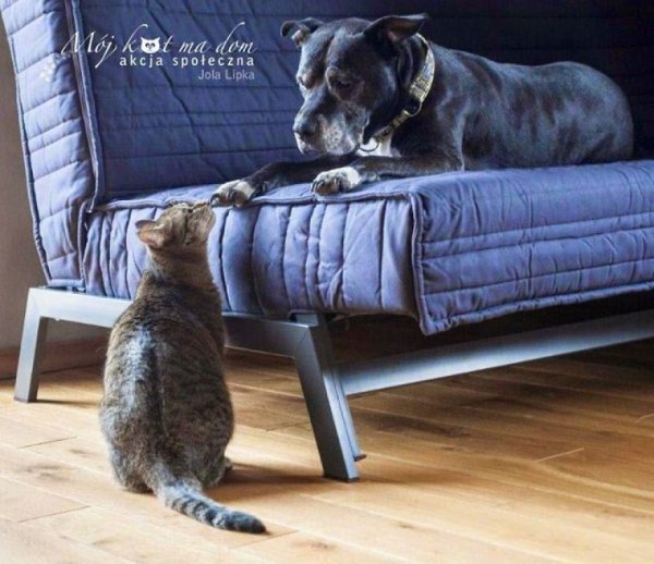 beautiful social campaign promoting adoption of homeless animals 4