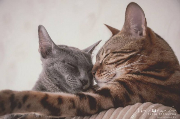 beautiful social campaign promoting adoption of homeless animals 7