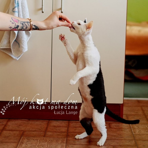 beautiful social campaign promoting adoption of homeless animals 9