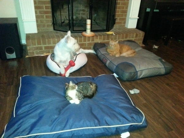 bed thieves have never been so cute 12 pictures 11