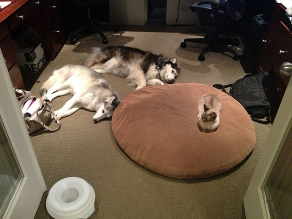 bed thieves have never been so cute 12 pictures 5