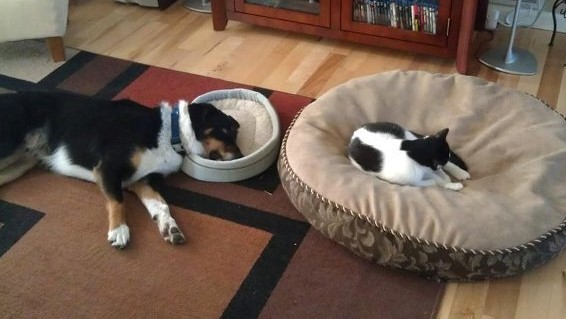 bed thieves have never been so cute 12 pictures 8