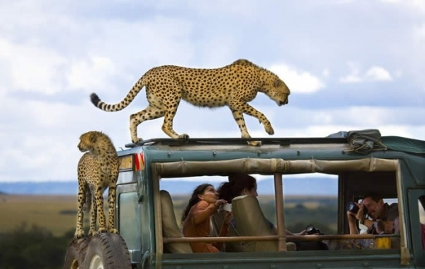 best animal pictures in 2013 by national geographic 12 pics 3
