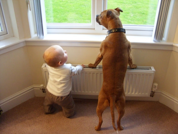 big dog is a danger to the baby nah 14 pics 10
