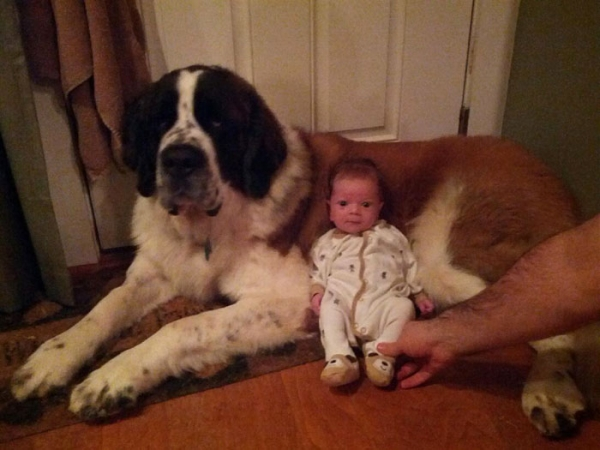 big dog is a danger to the baby nah 14 pics 11