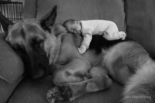 big dog is a danger to the baby nah 14 pics 12