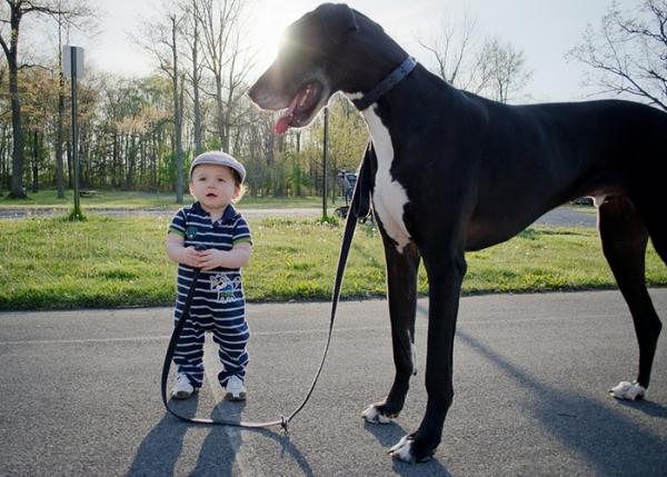 big dog is a danger to the baby nah 14 pics 2