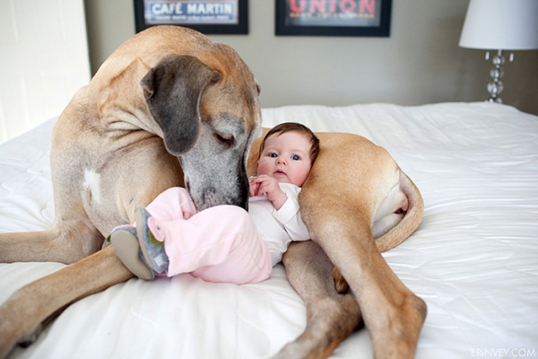 big dog is a danger to the baby nah 14 pics 3
