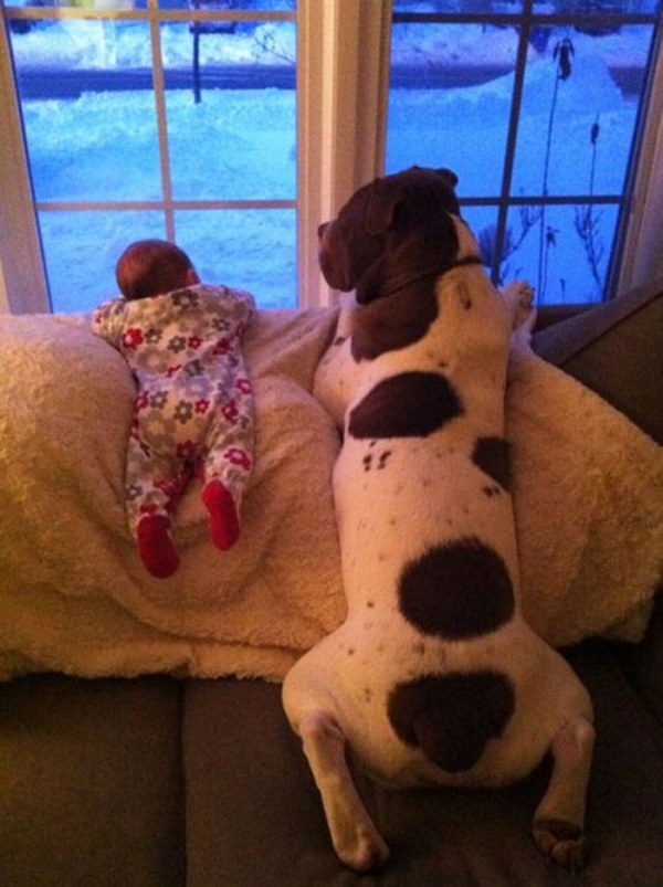big dog is a danger to the baby nah 14 pics 4