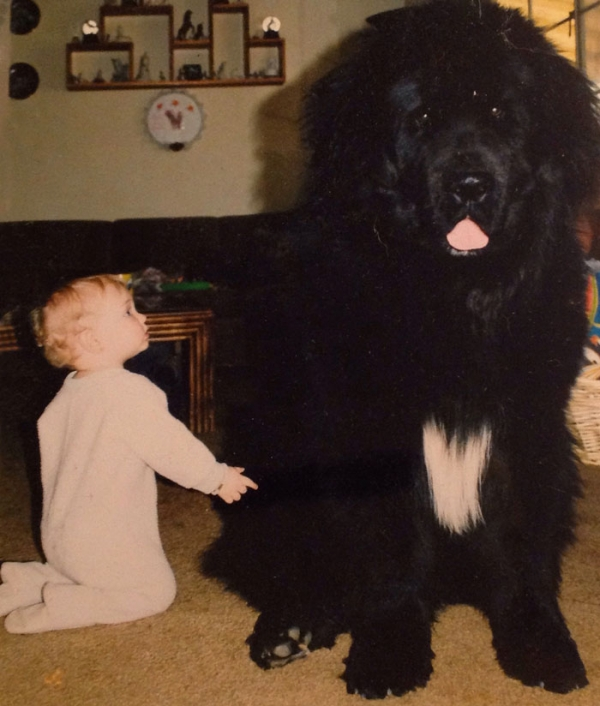 big dog is a danger to the baby nah 14 pics 5