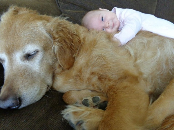 big dog is a danger to the baby nah 14 pics 7