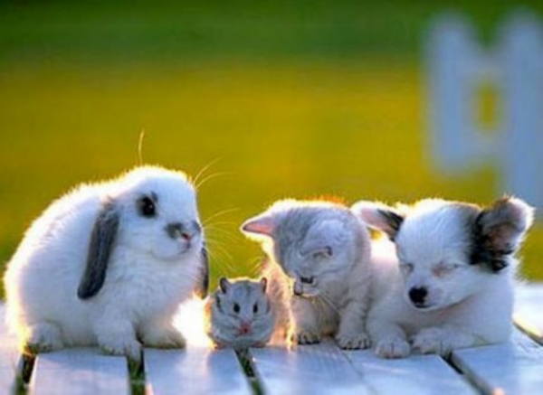 big happy and above all adorable family 15 pictures 10