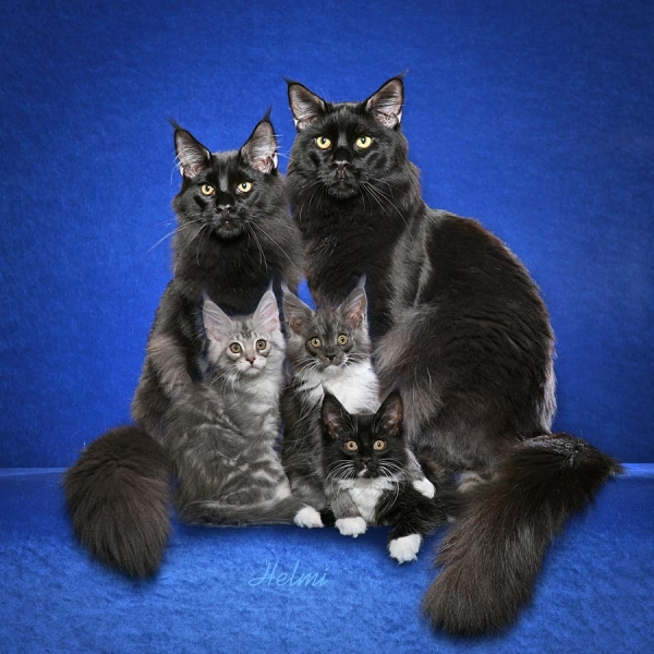 big happy and above all adorable family 15 pictures 11