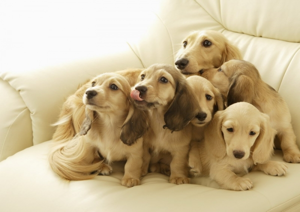 big happy and above all adorable family 15 pictures 12