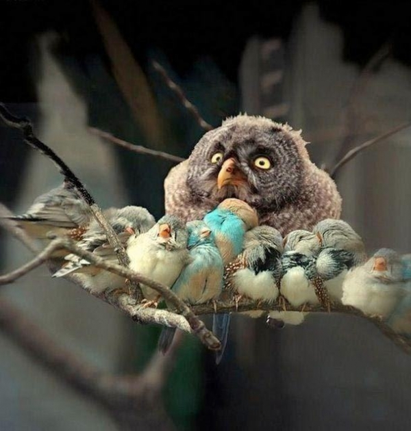 birds are really amazing parents 10 pictures 4