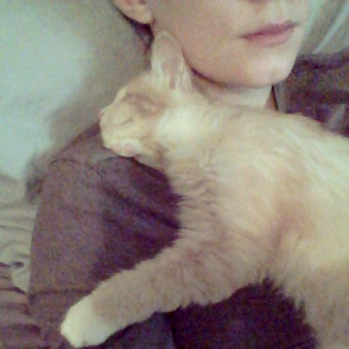blinkin the blind but snuggliest cat in the world 7 pics 4