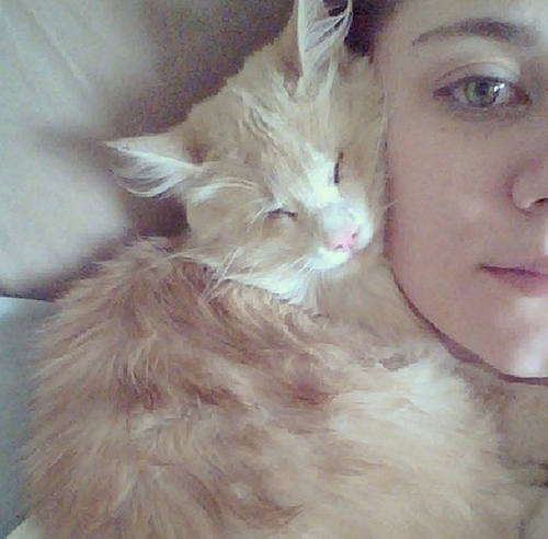 blinkin the blind but snuggliest cat in the world 7 pics 7