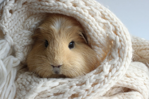 booboo  the gang 13 pic of the most adorable guinea pig models 10