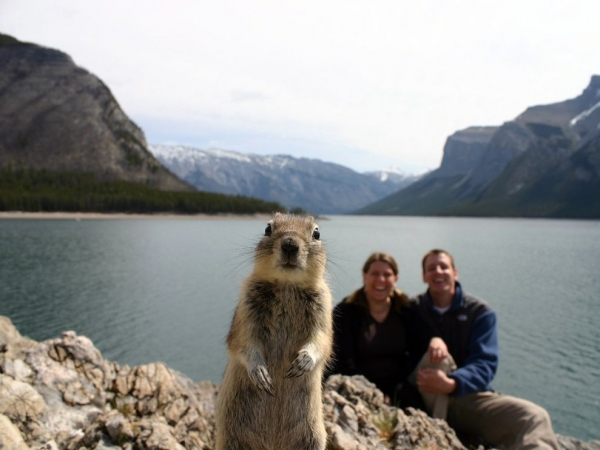 both adorable and awkward animal photobombs 15 pictures 1
