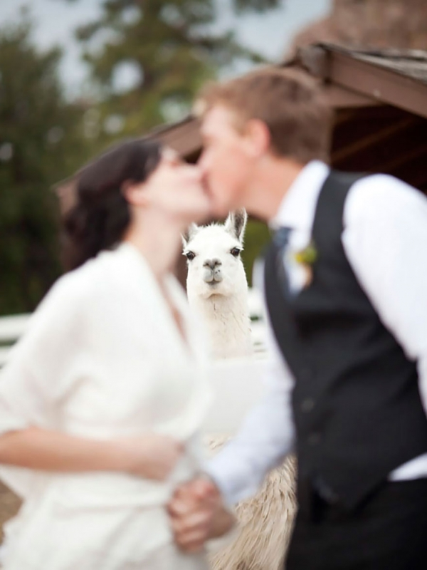 both adorable and awkward animal photobombs 15 pictures 15