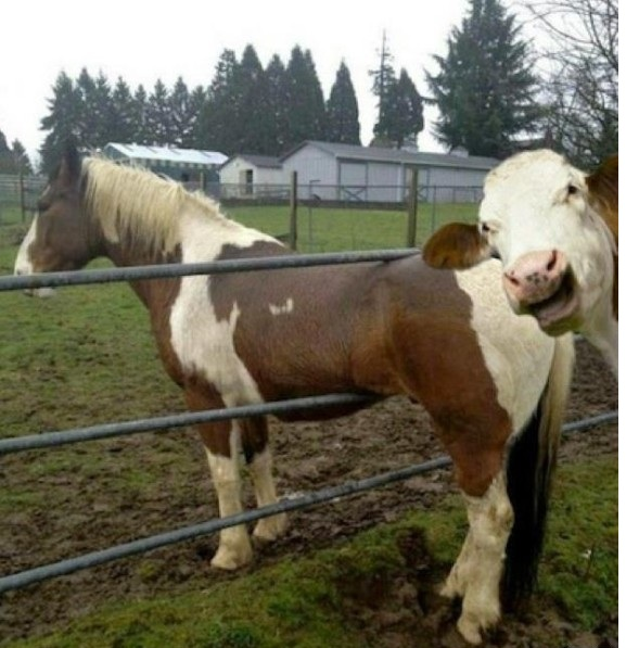 both adorable and awkward animal photobombs 15 pictures 5