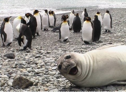 both adorable and awkward animal photobombs 15 pictures 7