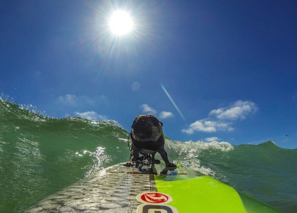 brady and kuli masters of surfing 12 pictures 1