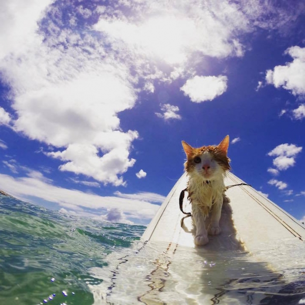brady and kuli masters of surfing 12 pictures 11