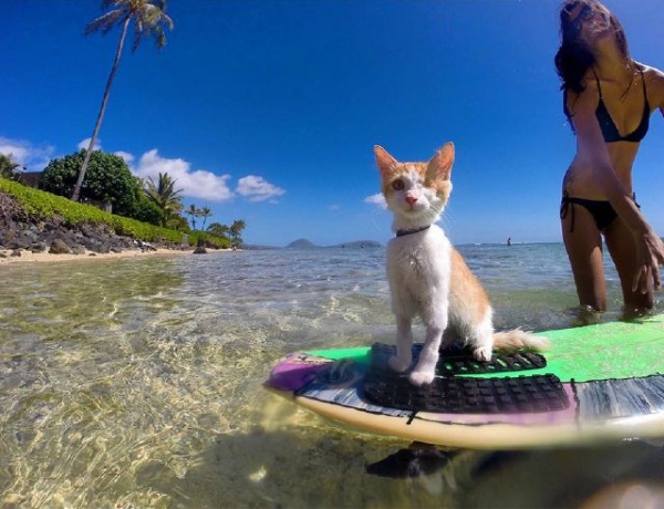 brady and kuli masters of surfing 12 pictures 16